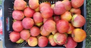 Яблочный сад 2 га