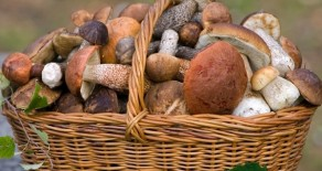 Workshop for the processing of forest mushrooms and dried fruit